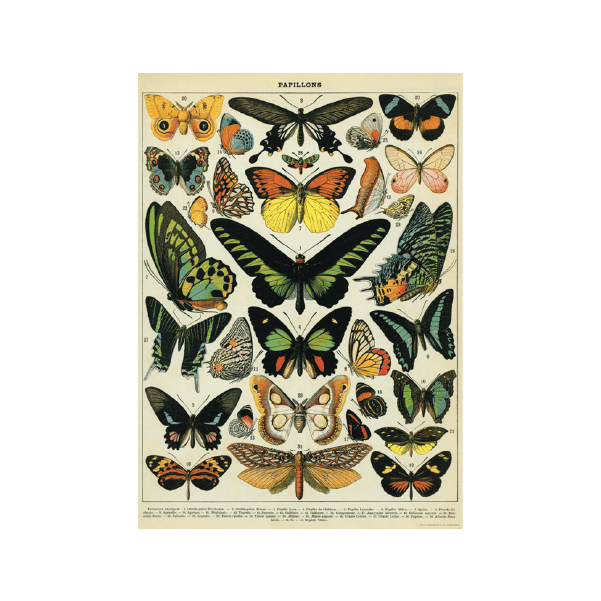 poster papillons cavallini