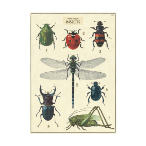 POSTER GALERIE D'INSECTES